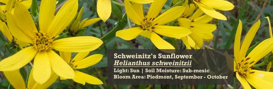 North Carolina Native Plant Society