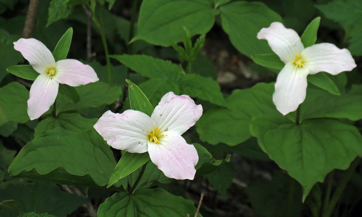 Events North Carolina Native Plant Society