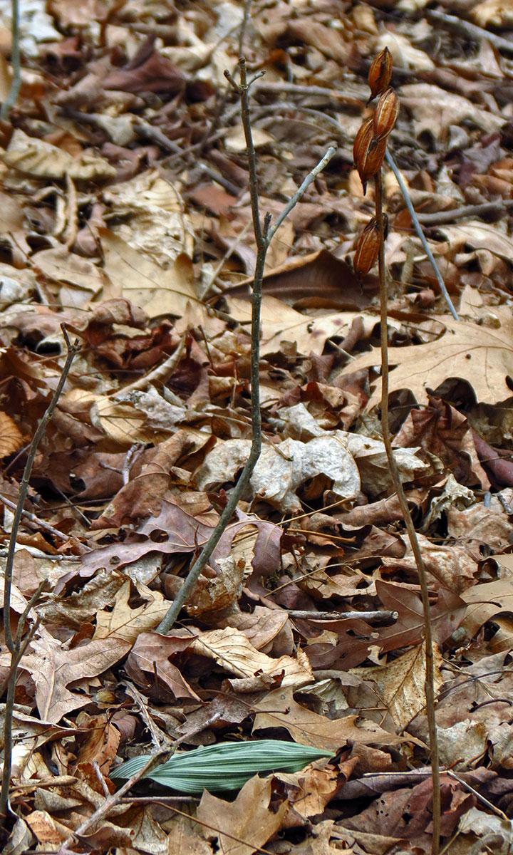 Image Galleries - North Carolina Native Plant Society
