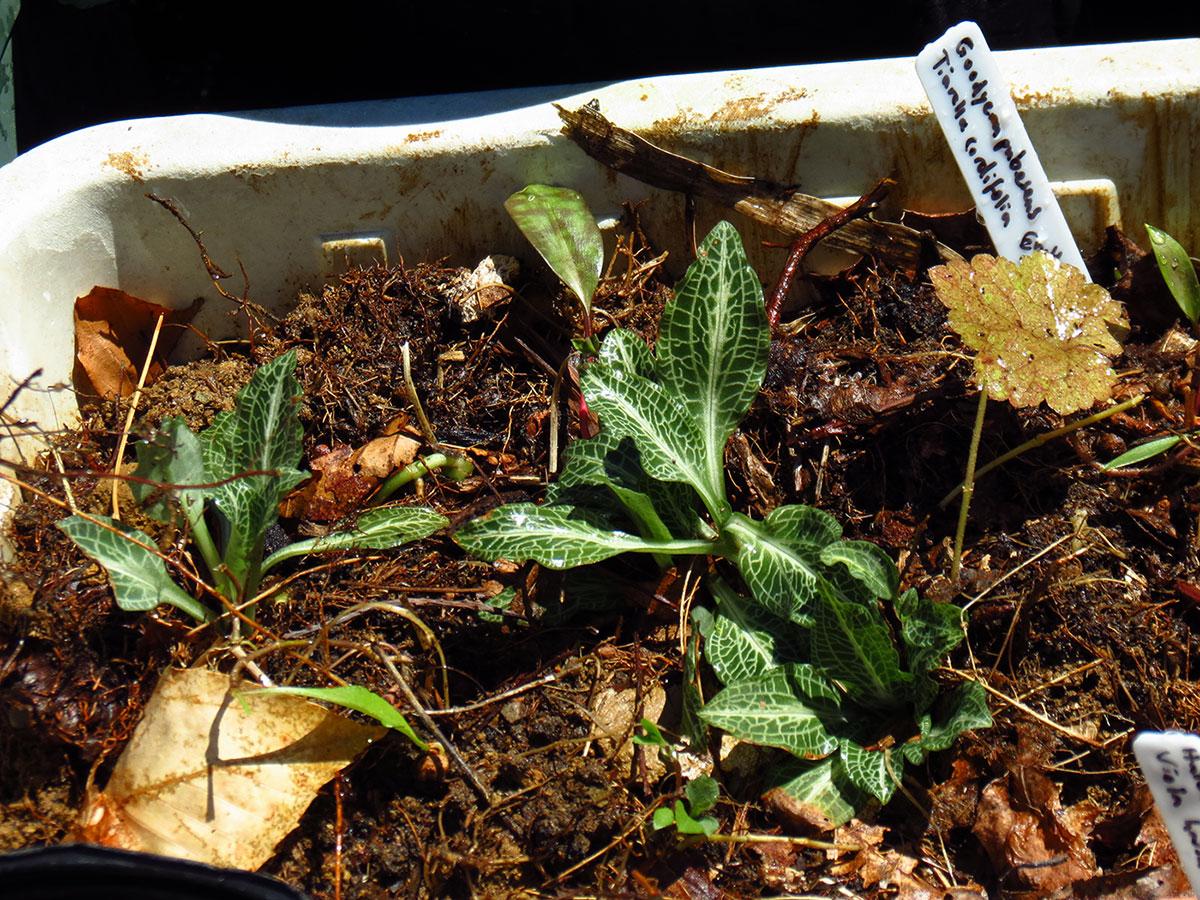 North Carolina Native Plants Society - Trip Features -