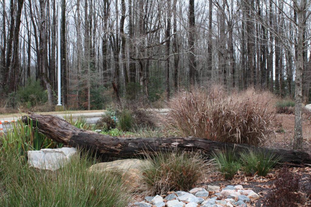 Forest Ridge wildlife garden