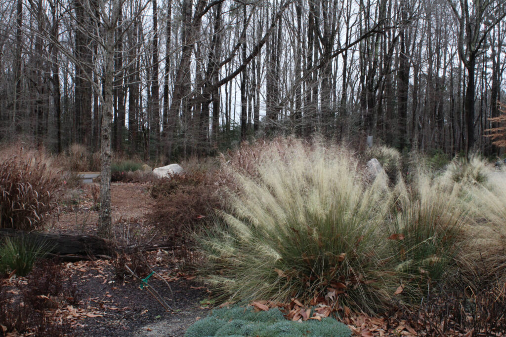 Forest Ridge Park wildlife garden