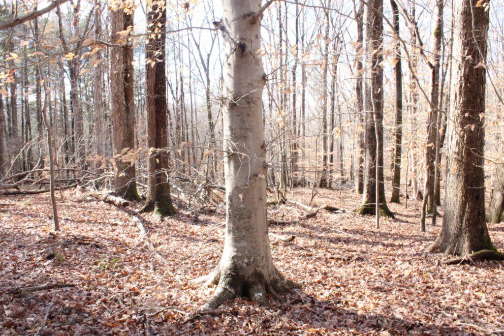 Mesic Forest