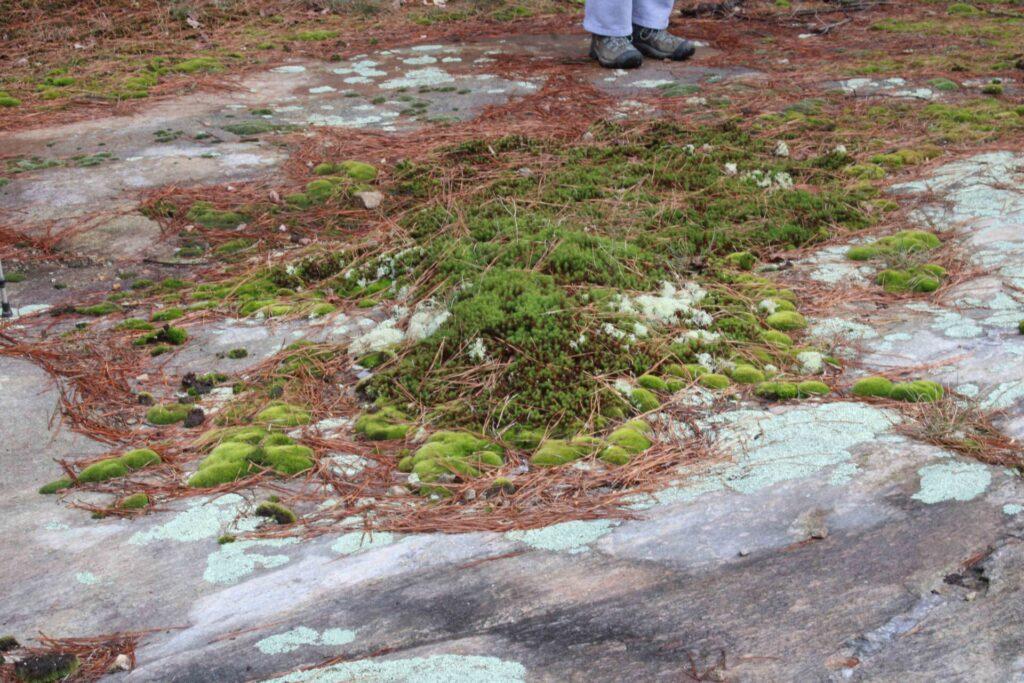 Flat rock plant community