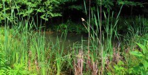 Kolb farm small pond