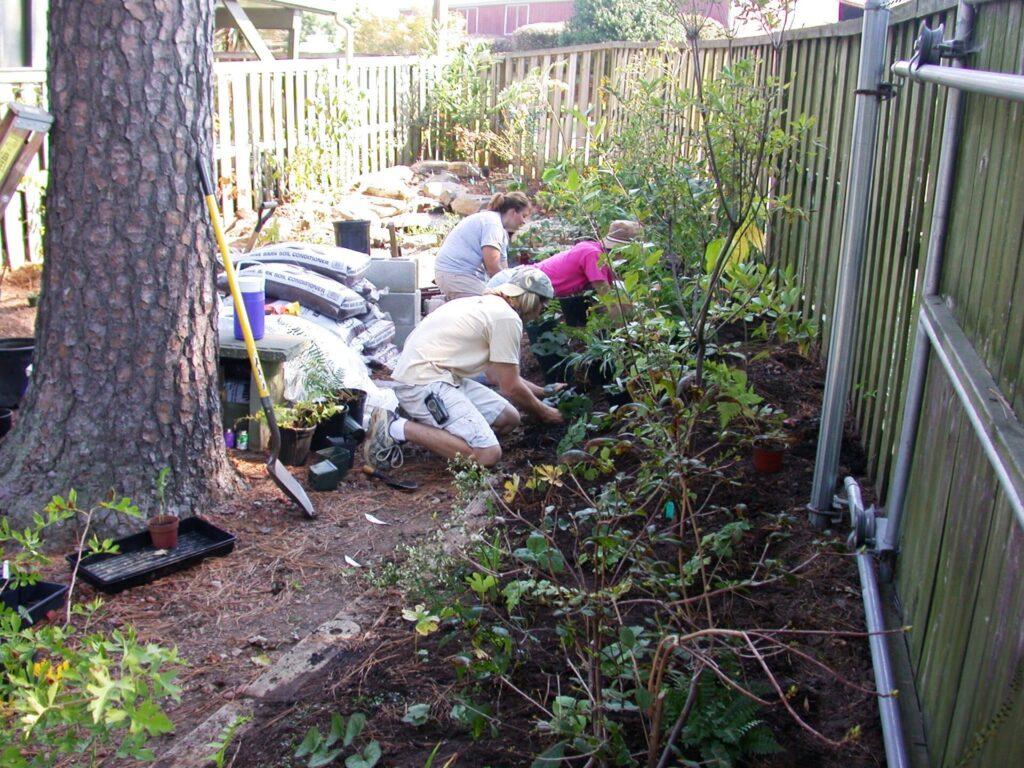 planting new Fair garden