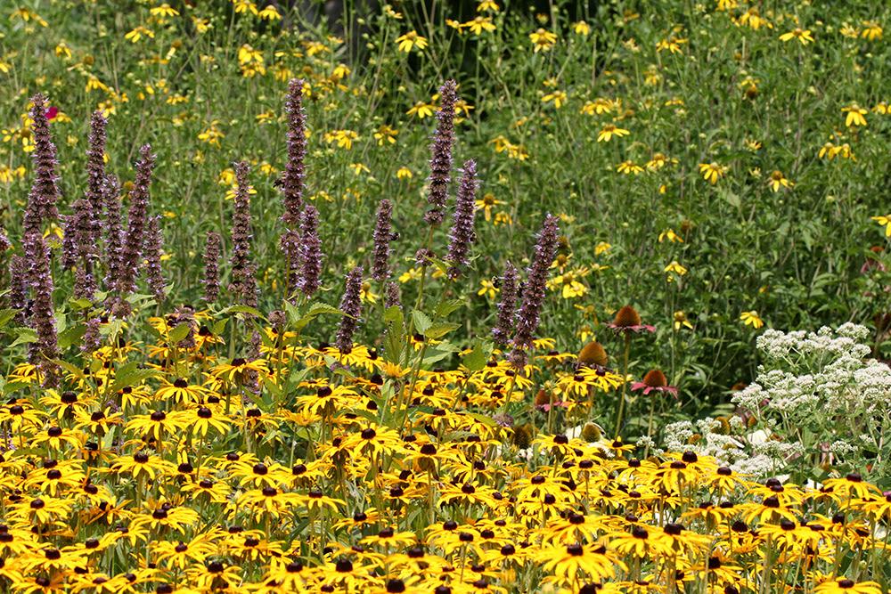 Pollinator Paradise Garden at Chatham Mills in Pittsboro NC
